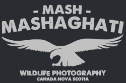 Mash Mashaghati Wildlife Photography Logo